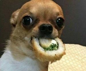 dog, food, and meme image