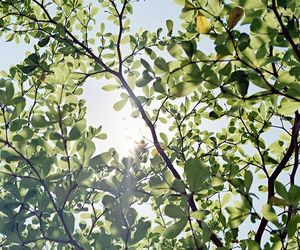 green, spring, and sun image