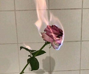 rose, fire, and flowers image