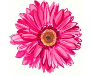 daisy, pretty, and flowers image