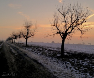 cold, sunrise, and trees image