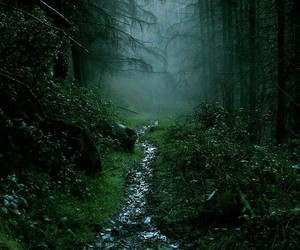 — Mist in Rostrevor forest byDarren Giddins