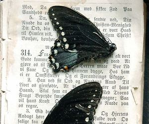 butterfly, black and white, and book image