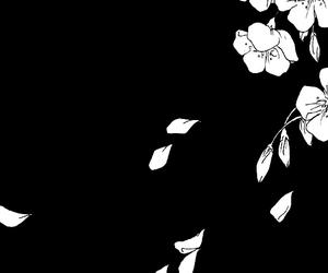 black and white, monochrome, and sakura image