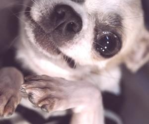 animals, baby, and baby dog image