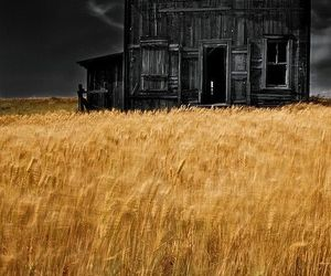 abandoned, yellow, and barn image