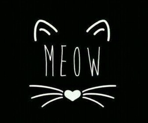 cat, meow, and black image