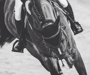 black and white, competition, and equestrian image