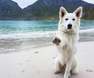 animal, dog, and beach+ image