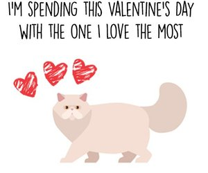 cats, Valentine's Day, and love image