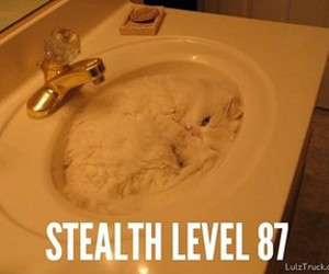 cat and sink image