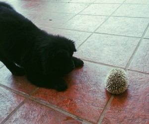 animals, dog, and hedgehog image