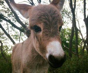 animal, donkey, and nature image
