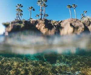 nature, tumblr, and palms image