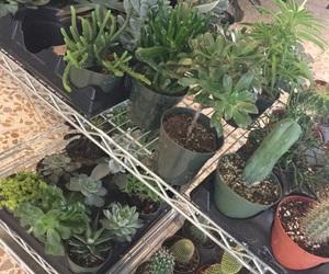 cacti, cart, and pot image