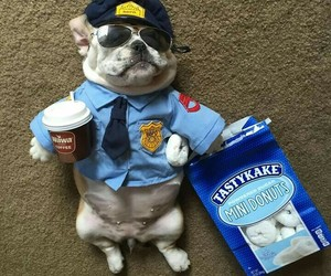 alternative, police, and puppy image