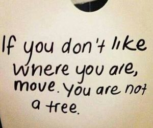 quotes, tree, and Move image