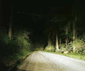 dark, forest, and gloomy image