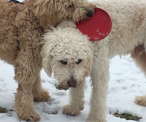 best friends, play, and snow image