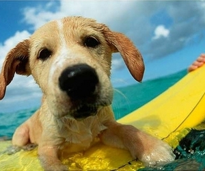 dog, cute, and surf image