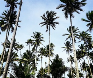 beauty, coconuttree, and Philippines image