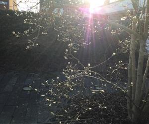 boom, kleurijk, and zon image