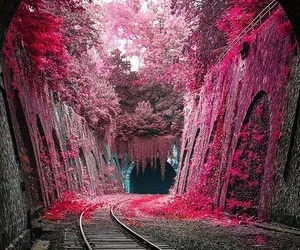 Image by Flos Autumnus