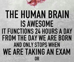 brain, love, and exam image
