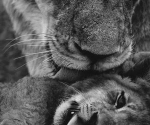 baby, cub, and sweet image
