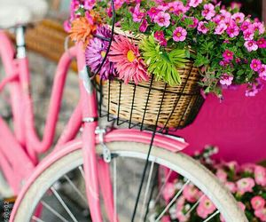 flowers, bicycle, and pink image