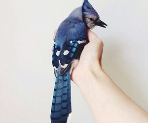 bird, blue, and animal image