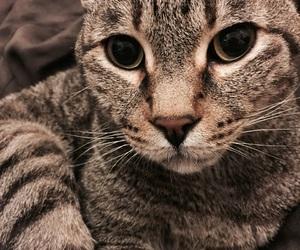 cats, random, and eyes image