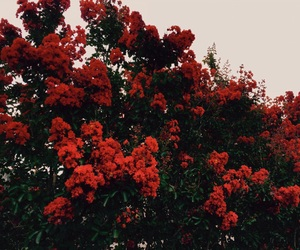 flowers, red flowers, and red image