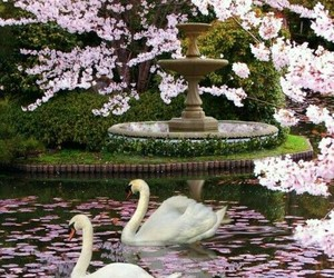 Swan, flowers, and nature image