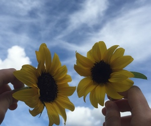 flowers, aesthetic, and clouds image