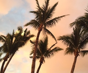 beautiful, clouds, and palms image