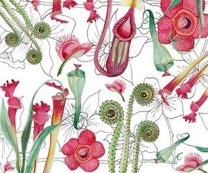 background, botanical, and carnivorous plant image