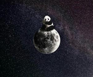 moon, panda, and space image