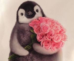 penguin, flowers, and animal image