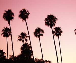 pink, summer, and palm trees image