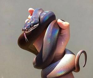 snake, animal, and rainbow image