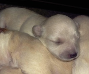 puppies, puppy, and sleeping image