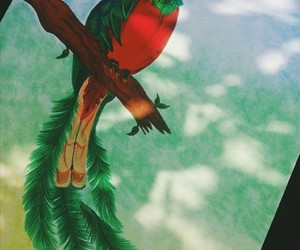 bird, quetzal, and color image