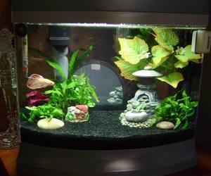 betta fish tank and freshwater tank image