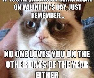 funny, grumpy cat, and cat image