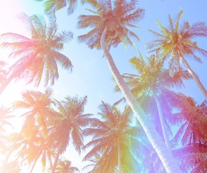 wallpaper, summer, and palms image