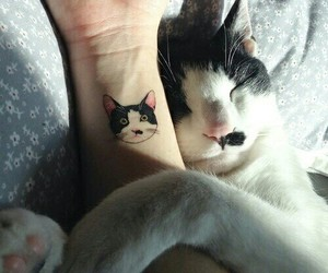 cat, tattoo, and animal image
