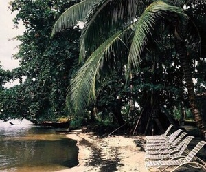 green, tropical, and nature image