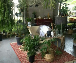 plants, interior, and room image