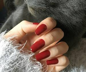 nails, cat, and red image